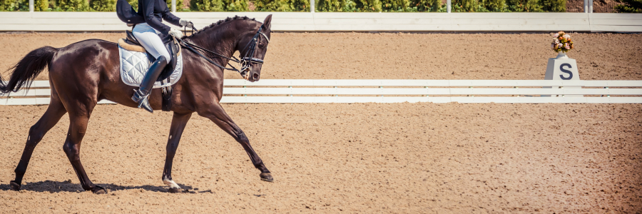 COVID-19 Liability:  Practical Guidance on Risk Management for Horse Shows and Competitions